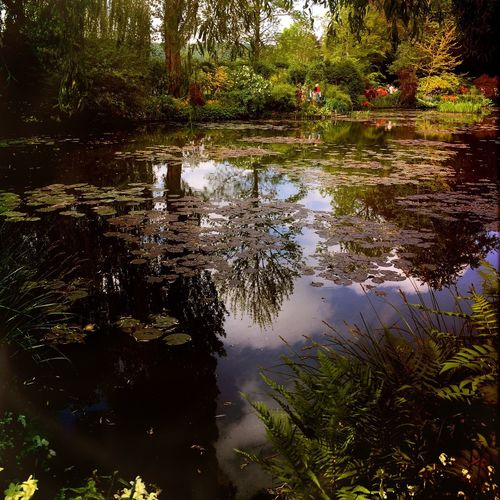 Garden Photography Gardens Countryside Jardin Landscape_Collection EyeEm Nature Lover Monet House Hipstamatic Beautiful