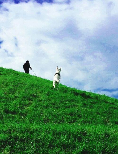 Friends Friendship My Dogs Are Cooler Than Your Kids Enjoying Life AntiM Petlife Princess I Love My Dog❤ The Traveler - 2015 EyeEm Awards The Great Outdoors - 2015 EyeEm Awards