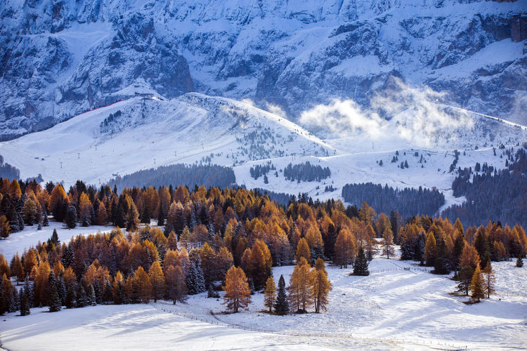 Scenic view of trees on snow covered land