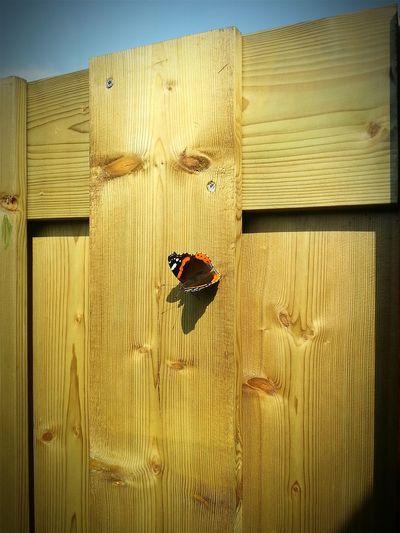 Beautiful Nature Butterflies Butterfly Backyard