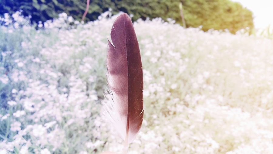 Feather - Good things gonna coming soon 😉 Feather  Angel Grass Nature Outdoors Lucky Day