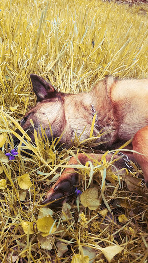 View of animal sleeping on grass