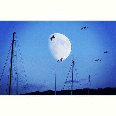 Seagulls Moon Nature_pd Nature_up_close Ig_nature Jj_sombre Photoarena_nature Bindebros Photo Of The Day Phototag_it Thevividworld 5foru Top100shots Moon Moonlight Moonshine