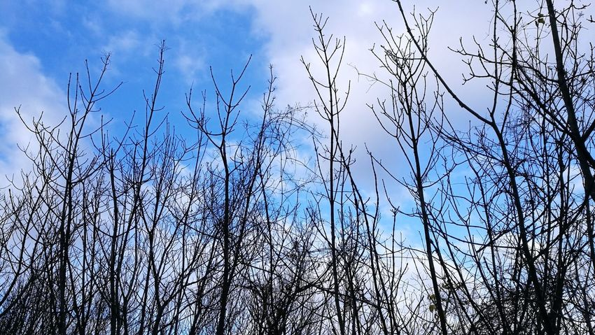 Sky Nature No People Day Outdoors Beauty In Nature Mother Nature Beauty In Nature Cold Temperature Cloud - Sky Tree