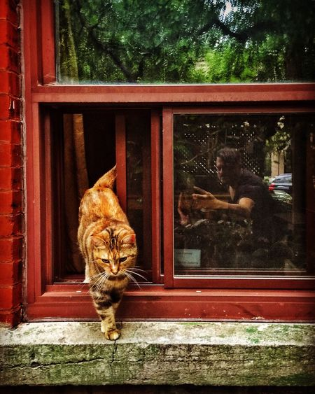 Diki And I ! Animal Themes Domestic Animals Mammal Domestic Cat Pets One Animal Cat Carnivora Window Feline Glass - Material Whisker Window Frame My Reflection