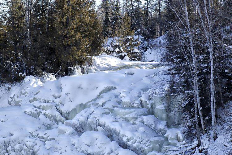 Stream passing through forest