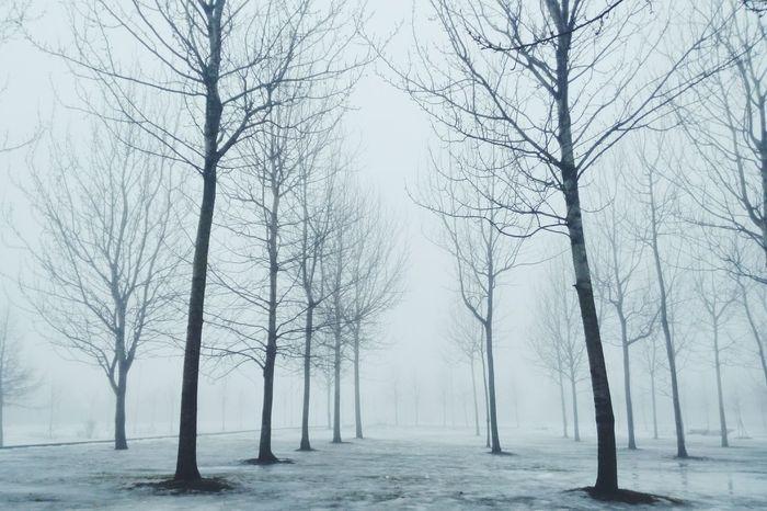 Fog Saint-p Landscape