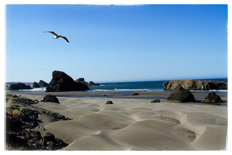 Seagull on the Oregon coast. Canon Photography