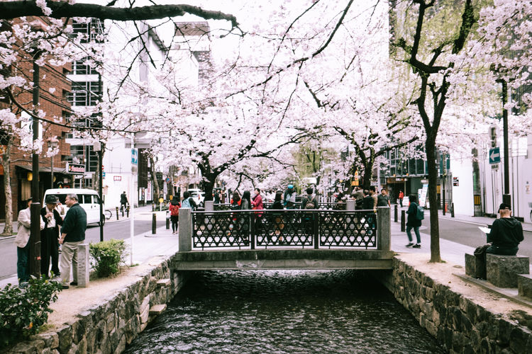 Architecture Blossom Branch Bridge Flower Full Length Hanami Japan Japan Photography Kyoto Large Group Of People Outdoors Real People River Sakura Streetphotography Tree