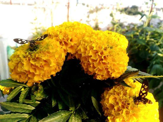 Sweet Ownphotography Nature Flowers Natural Beauty Beautiful SmallFlowers Aleksandr Sereda AAA