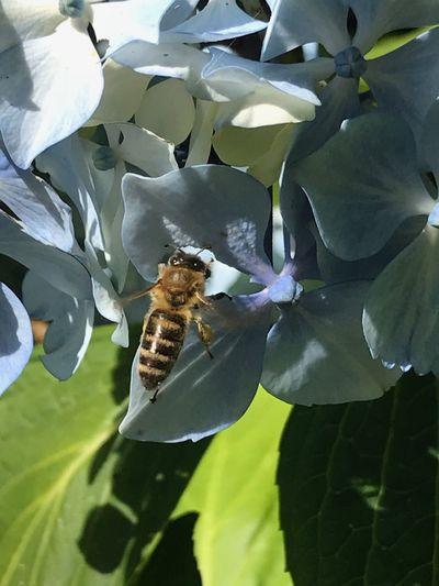 Busy Bee Animal