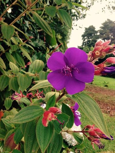 Growth Nature Flower Freshness Fragility Plant Flower Head Close-up Costa Rica