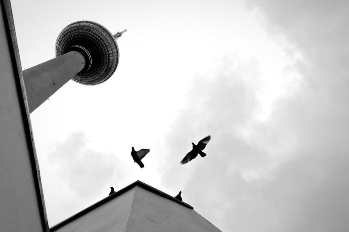 International Landmark in Black And White Tvtower Berlin Light And Shadow Monochrome Birds EyeEm Best Shots EyeEm Gallery OpenEdit Up In The Sky Seeing The Sights
