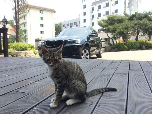 MGM Hotel Cat Name is Butter