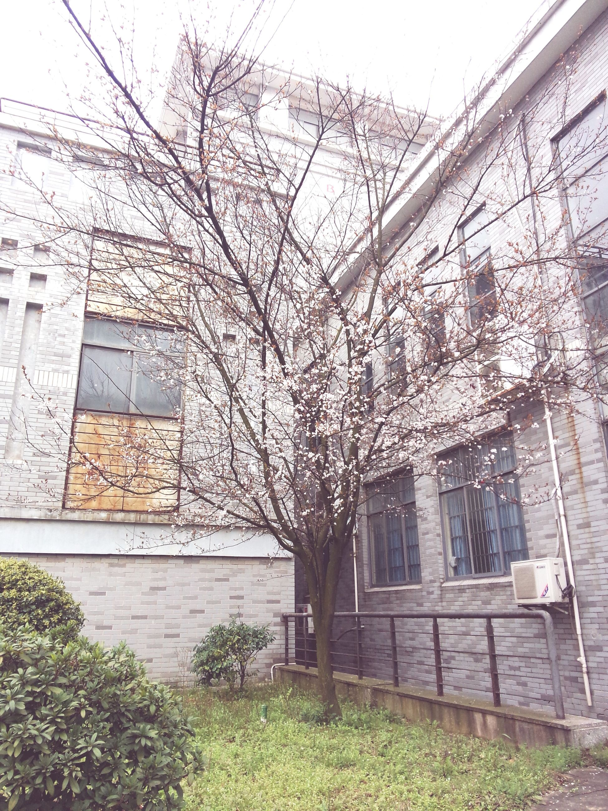 architecture, building exterior, built structure, bare tree, tree, branch, window, building, house, day, residential building, residential structure, ivy, wall - building feature, plant, city, growth, outdoors, no people, sky