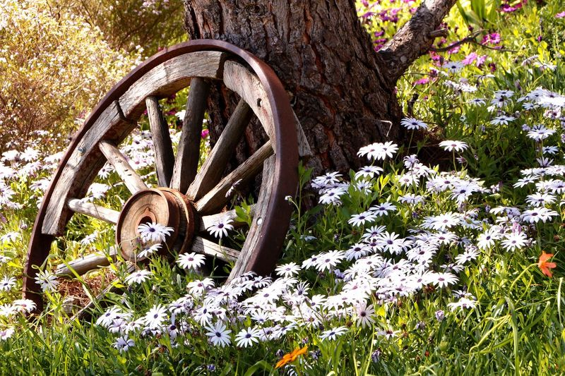 A worn out old wagon wheel finds rest at last in the garden Animal Themes Beauty In Nature Broken Day Floral Photography Flowers Garden Photography Growth Landscape_photography Nature No People Outdoors Rustic Spring Flowers Tree Wagon Wheel Wheel Wood - Material
