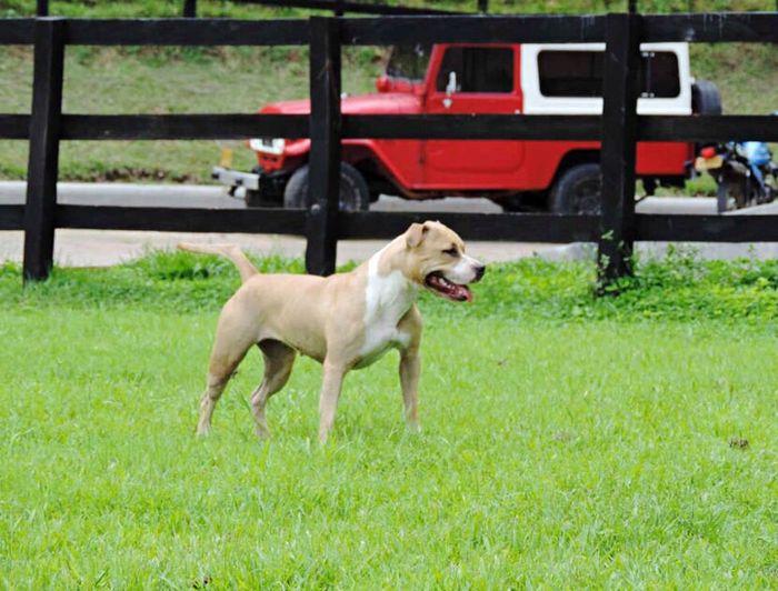Mi amiga fiel Villavicencio Dog Pet Animal Nature Colombia