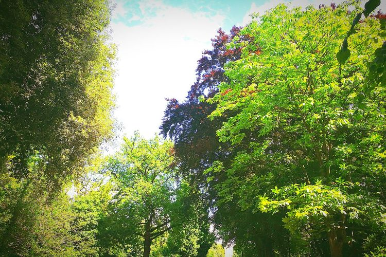 Tree Day Growth Outdoors Nature Water No People Sky Beauty In Nature Chestnut Tree Beech Tree Blue Sky Arboretum