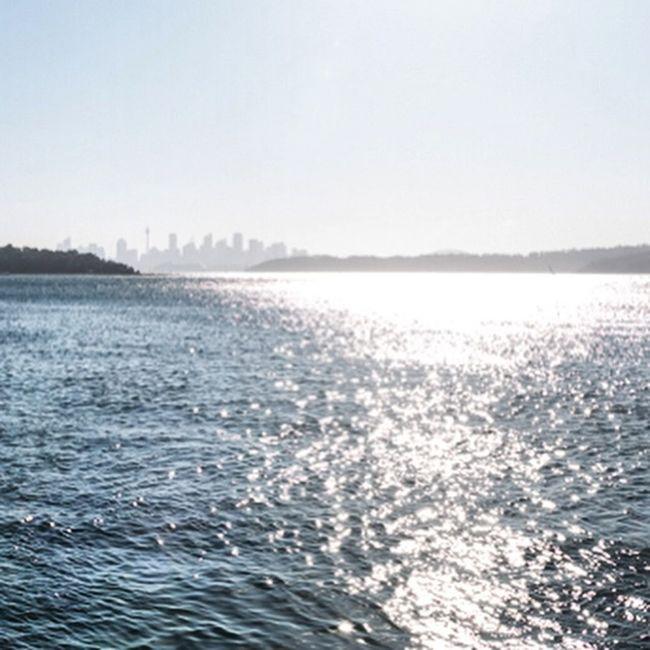 Water Sydneyharbour Summer Sea