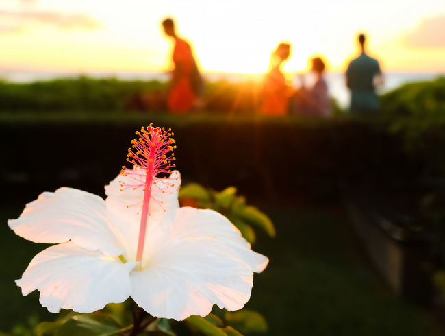 Hawaii Beauty In Nature Blooming Blurred People Close-up Day Flower Flower Head Focus On Foreground Fragility Freshness Growth Hibiscus Nature Outdoors Petal Plant Sky Sunset