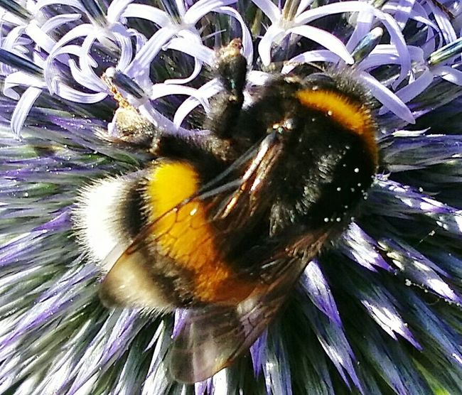 Humble-bee EyeEm Nature Lover Insect Photography EyeEm Best Shots AntiM