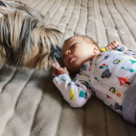 Newborn baby meeting doggy Animal Animals Baby Bed Child Contact Dog Dog And Baby Dog Love Doggy Domestic Animals Emotion Face Family Guardian Infant Innocence Looking Looking After The Kids Love Meet Meeting Newborn Pet Puppy