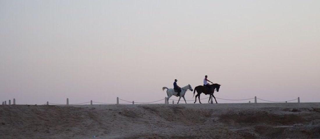 Bahrain Bahrain Fort Arabic Culture Horse Horse Riding