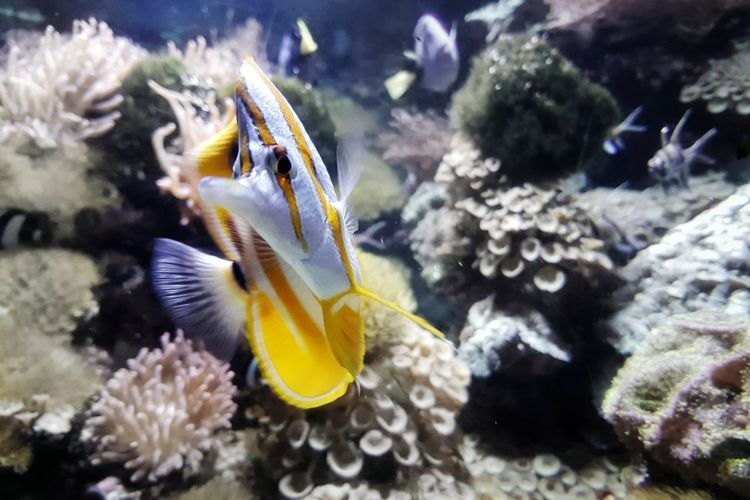 EyeEm Best Shots EyeEm Nature Lover EyeEm Gallery EyeEm Selects Taking Photos Taking Pictures My Point Of View Light And Shadow Fish Turn UnderSea Sea Life Swimming Water Underwater Sea Coral Fish Multi Colored Close-up Tropical Fish Saltwater Fish Aquarium