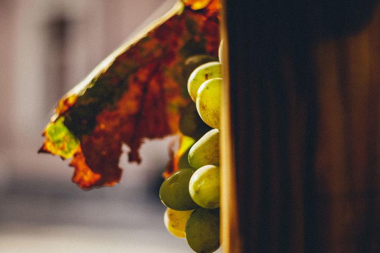 Close-up of orange fruit hanging on plant