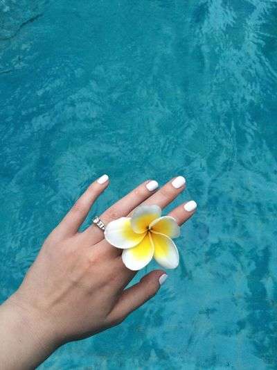 Cropped hand of woman holding flower on swimming pool