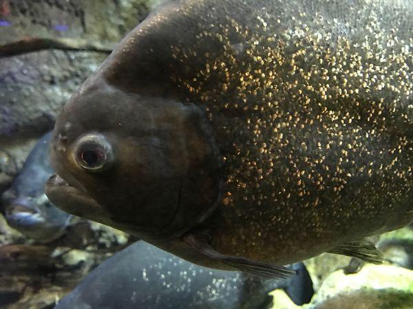 Fish Close-up Aquarium