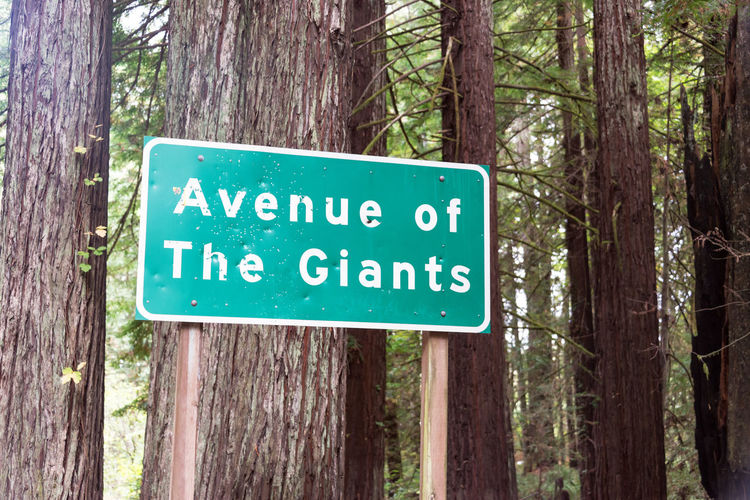 Highway sign for the Avenue of the Giants near Humboldt Redwoods State Park in California California USA America Redwoods Redwood Redwood Trees Redwood Forest Travel Travel Destination Tourism Plant Nature Day Outdoors Landscape Humboldt Redwoods State Park Sign Western Script No People Information Guidance Tree Text Forest Tree