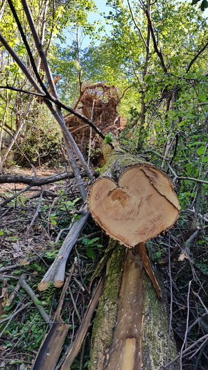 Heart Heart ❤ Toadstool Bark WoodLand Beauty In Nature Field Timber Deforestation Log Tranquility Outdoors Brown Mushroom Wood Fungus Day No People Wood - Material Nature Growth Forest Land Plant Close-up Tree Heart Shape