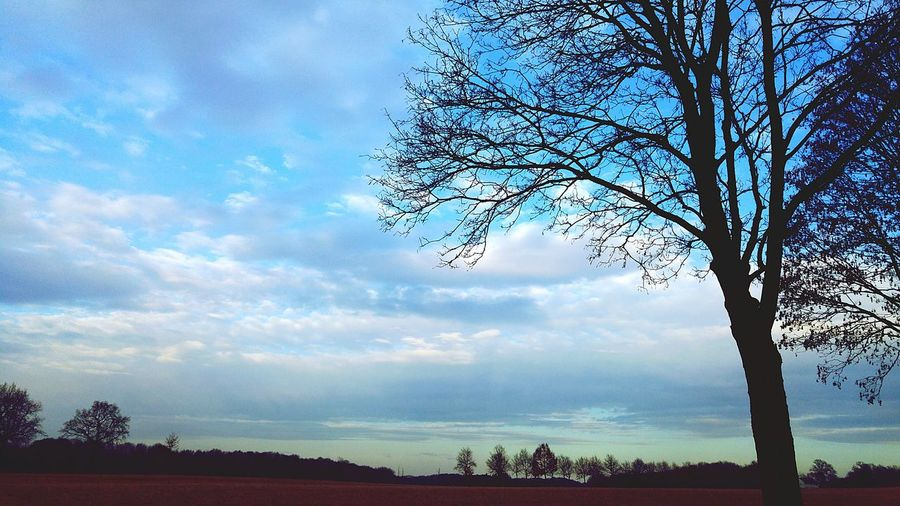 No People Day Cloud - Sky Tree Nature Outdoors Sky Beauty In Nature Spring Into Spring Springtime Almost Spring Tree Blue Sky 😚