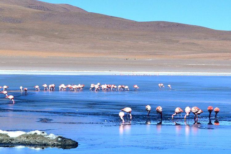 Landscape Flamingo Desert Oasis Lake Beautiful Nature Nature Animals Taking Pictures Eye4photography  Eyemphotography Holiday Traveling