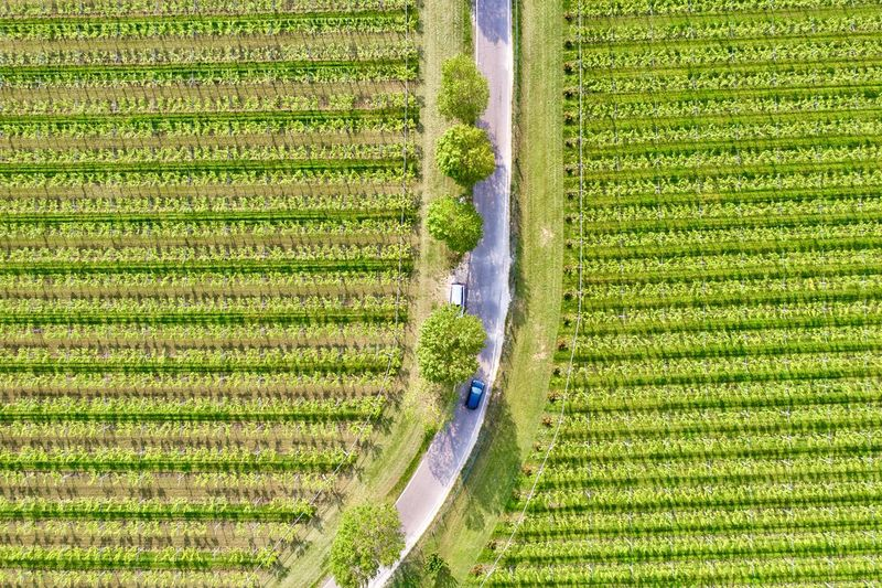 Italy, Verona: Valpolicella wineyards Drone  Green Color Agriculture Plant Land Nature No People Growth Field Wineyard Valpolicella Drone Photography From Above  High Angle View Looking Down Pattern Textured  Full Frame Crop  Backgrounds Parallel Lines Lines Landscape Springtime Day Daylight Daytime Geometry Horizontal Italy Verona Repetition Nature Outdoors Nobody Viniculture Environment Shades Of Green  In A Row Side By Side Order Abundance Rural Scene Aerial View Road Country Road Curve Scenics - Nature Tranquility Beauty In Nature Transportation