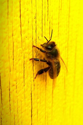 Insects  Paint The Town Yellow