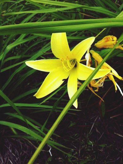Flower? First Eyeem Photo