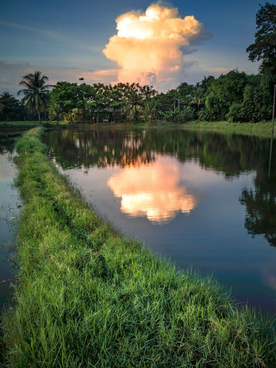 Reflection Tree Water Cloud - Sky Outdoors Lake Grass Sky Nature Landscape Scenics No People Multi Colored Day Beauty In Nature EyeEm Selects EyeEmNewHere Pangkep Southsulawesi EyeemNaturePower Nature_ Collection  Coconut Water Be. Ready.