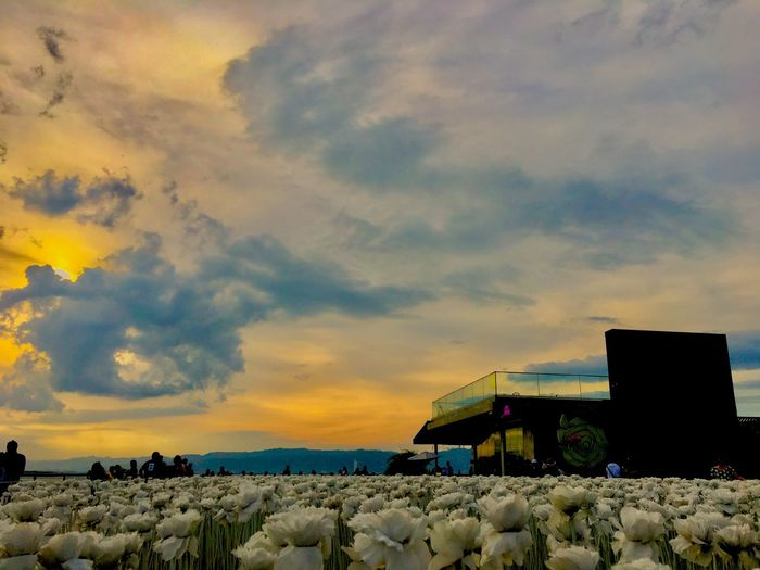 10000 Roses EyeEmBestPics Eyeemphotography EyeEm Selects Eyeem Philippines EyeEm Best Shots EyeEmNewHere Cloud Sunset Sunsetlover Sunset Lovers Cloud - Sky Sky Sunset Nature Beauty In Nature Scenics - Nature Water Tranquility Outdoors Dramatic Sky Tranquil Scene