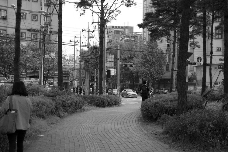 Adult Architecture Building Exterior Built Structure City Day Korea One Person Outdoors People Real People Rear View Seoul Street The Way Forward Tree