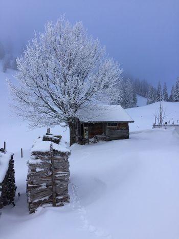 Schwarzsee Snow ❄ Skitouring Nature Beautiful Day Thankful