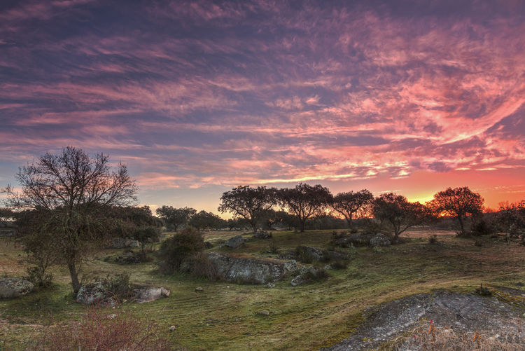 Good morning Alentejo Beauty In Nature Grass Hdr_Collection Landscape Nature No People Outdoors Sky Sunrise Tree Area