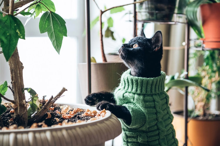Cat looking at potted plant at home