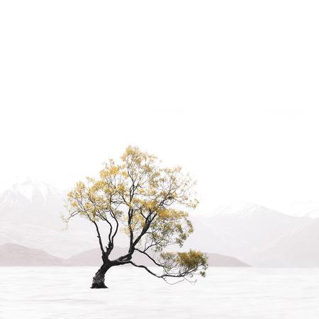 That Wanaka Tree Olympus Travel Tree Wanaka Landscape Minimal Minimalism New Zealand Sky Snow Wanaka Tree Water Visual Creativity