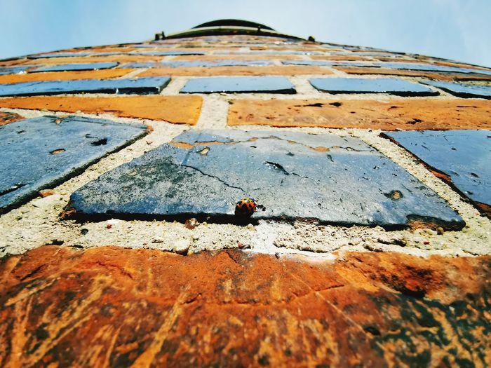 Ladybug Wall