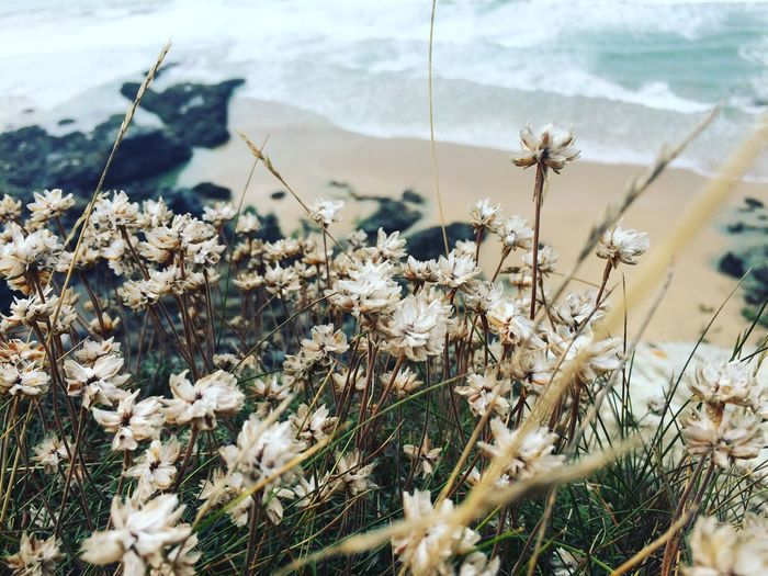 Beach Sea Nature Flowers Cliff Grass Adventure Beautiful Waves Blue White Green