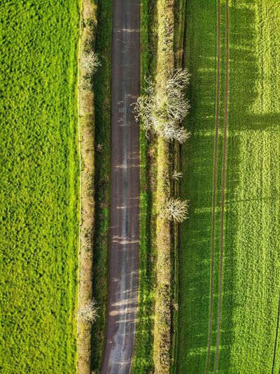 Top down view of road in the middle of the fields Drone Photograph DJI X Eyeem DJI Mavic Air Green Color Plant Nature High Angle View No People Day Growth Agriculture Field Grass Rural Scene Landscape Crop  Scenics - Nature Beauty In Nature Full Frame Land Farm Tranquility Environment