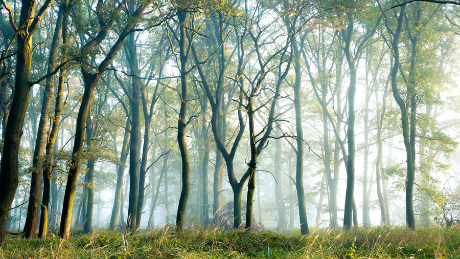 EyeEmNewHere Autumn Bare Tree Beauty In Nature Branch Day Deciduous Tree Fog Forest Freshness Grass Landscape Nature No People Outdoors Scenics Sunlight Tranquil Scene Tranquility Tree WoodLand