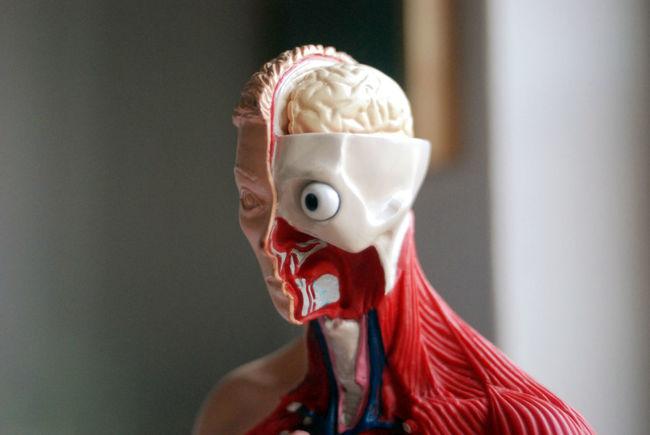 35 35mm 35mm Film Analog Analogue Analogue Photography Anatomical Anatomical Model Anatomy Brain HEAD Human Human Body Part Medical Morbid Skull